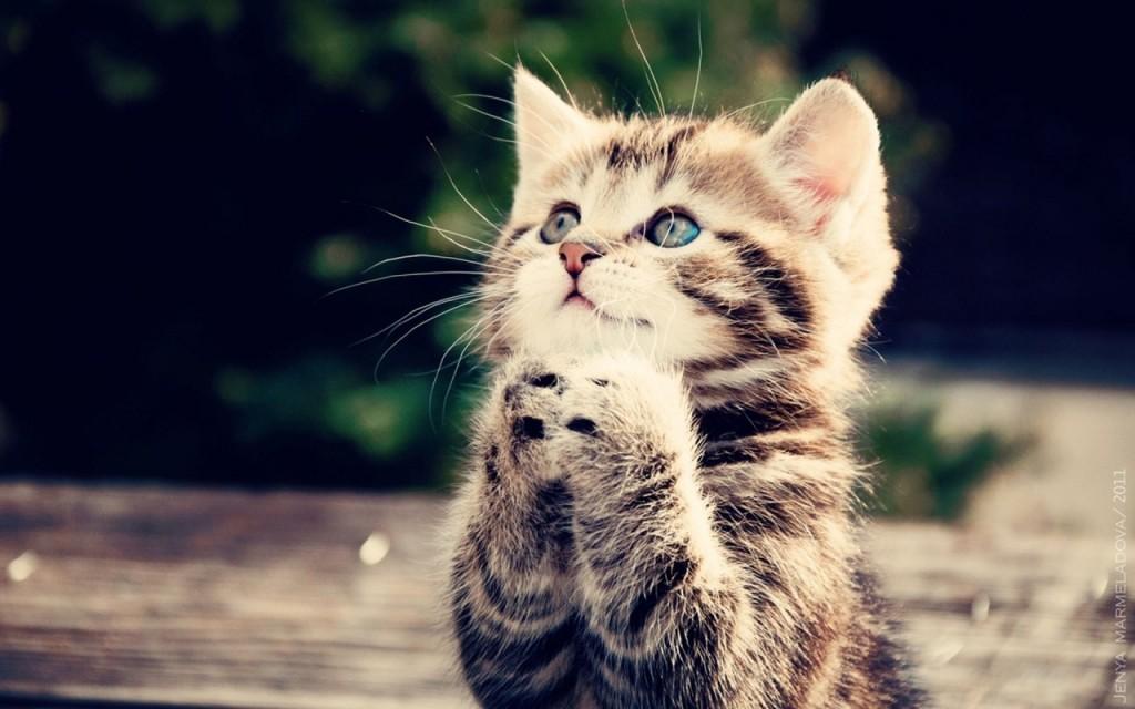 Cute-Cats-cats