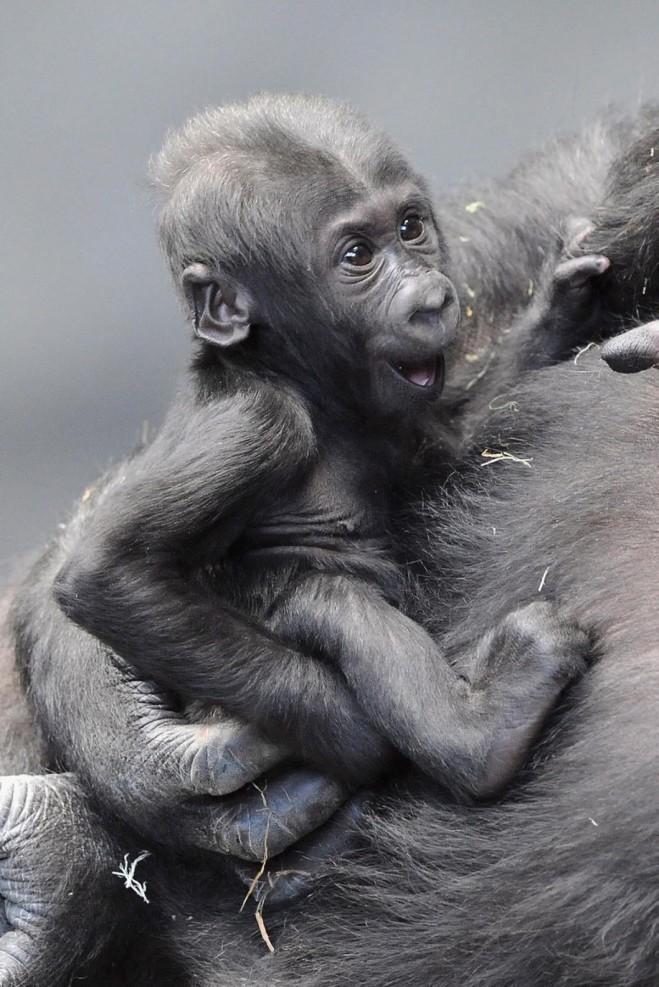 bebe singe