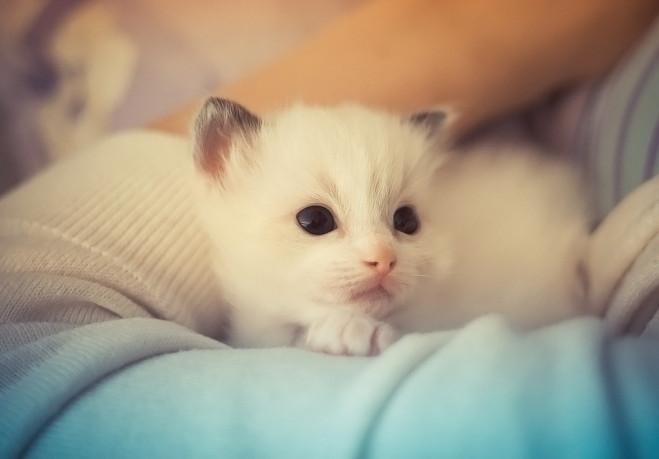 chat cute 11
