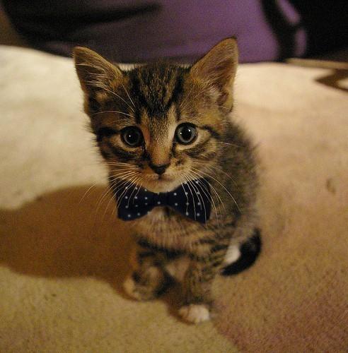 chat cute 14