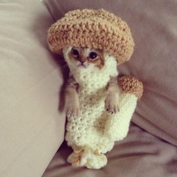 chat cute 9