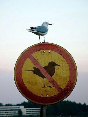 Les règles n'existent pas!