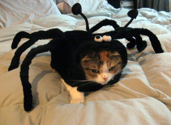 animal-costume-02