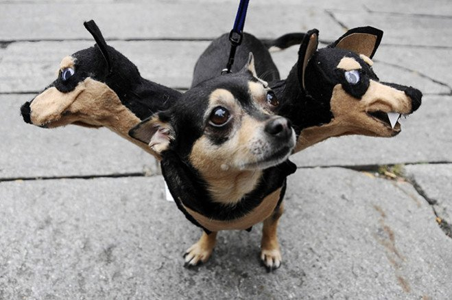 animal-costume-05