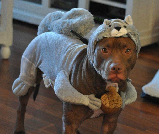 animal-costume-07