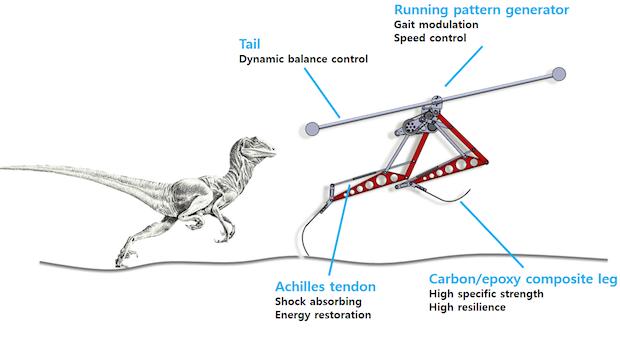 kaist-raptor-robot