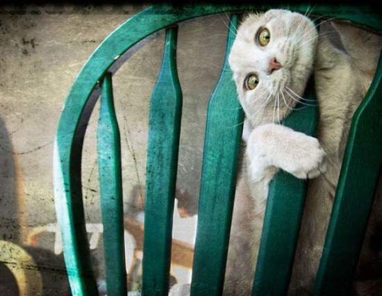un-chat