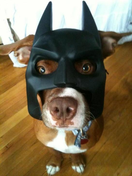 batman-dog-mask
