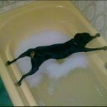 Ce chien adore l'eau