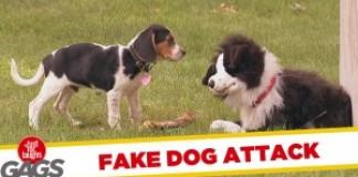 Chien en peluche vs Vrais chiens