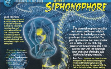 Giant_Siphonophore