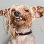 Ice bucket challenge chien