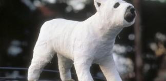 chien dans le plâtre