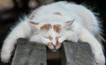 le-sommeil-du-chat