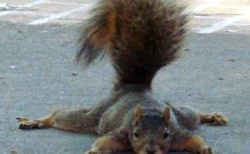 écureuil vole une caméra
