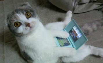 Chat DS Lite