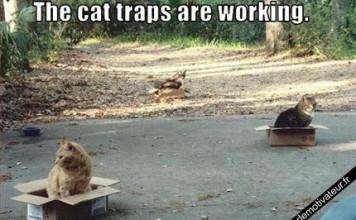 Un piège à chat