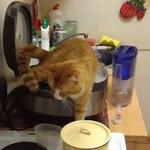 chat urine dans une friteuse