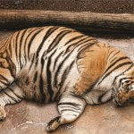 fat-animaux-1-659x473