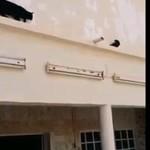 Chat vs Pigeon
