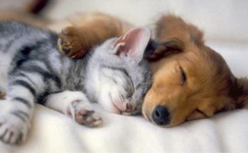 Instant tendresse entre un chien et un chat