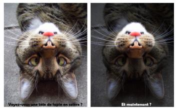 Un chat joue au jeu de la taupe