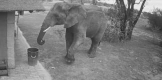 Video-Elephant-qui-jette-des-canettes-dans-une-poubelle