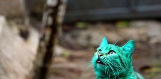 chat-vert