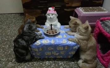 chats-fetent-anniversaire
