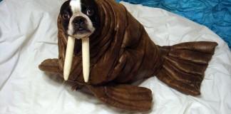 chien déguisé