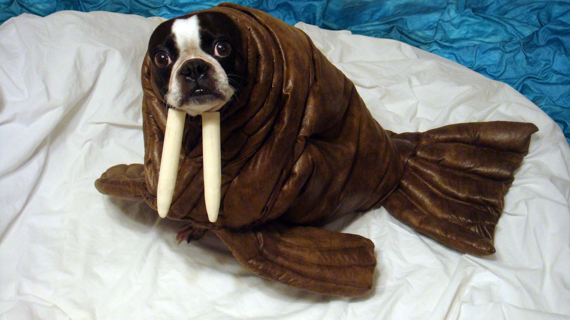 Boxer Halloween Costume For Dog