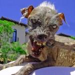 chien extraterrestre