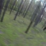 cycliste poursuivi par un ours dans la forêt