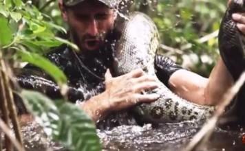 mangé vivant par un anaconda