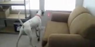 pointeur-laser-collier-chien