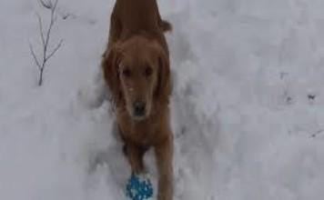Un chien troublé par un jouet qui couine