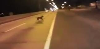 chien-teleportation-course-rue