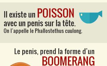 à_propos_du_pénis
