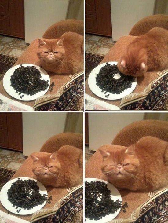 le-chat-qui-mange