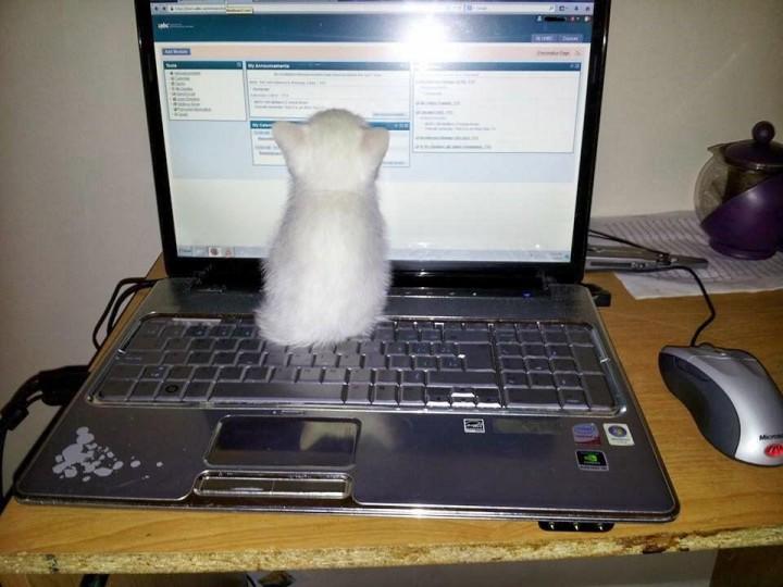 le-chat-qui-regarde-tux-720x540