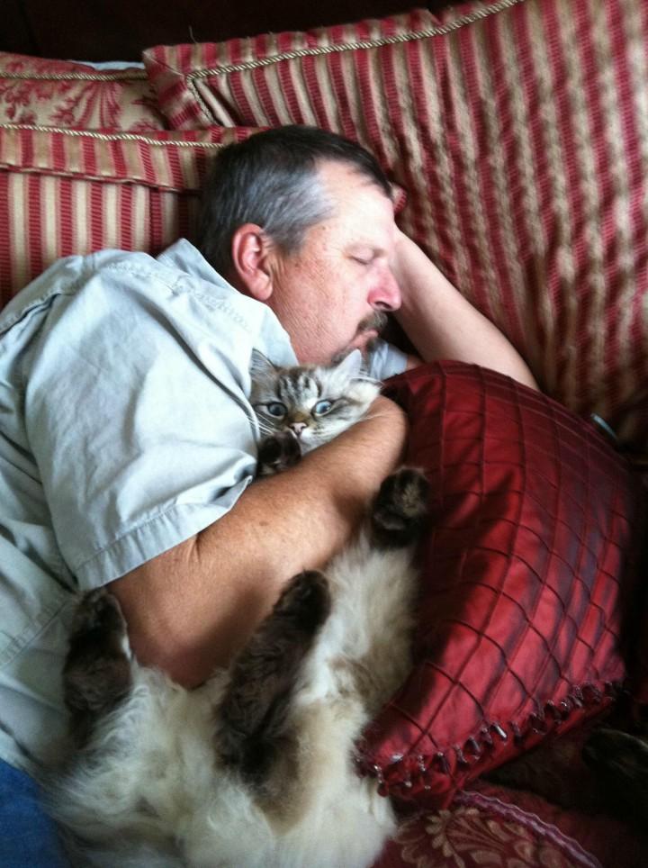 papa-dort-avec-le-chat-720x964