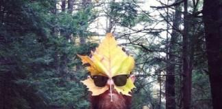 self-leaf