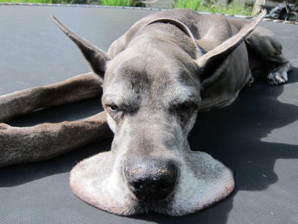 Картинки по запросу собака с щеками
