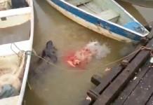 nourrir-piranha-riviere