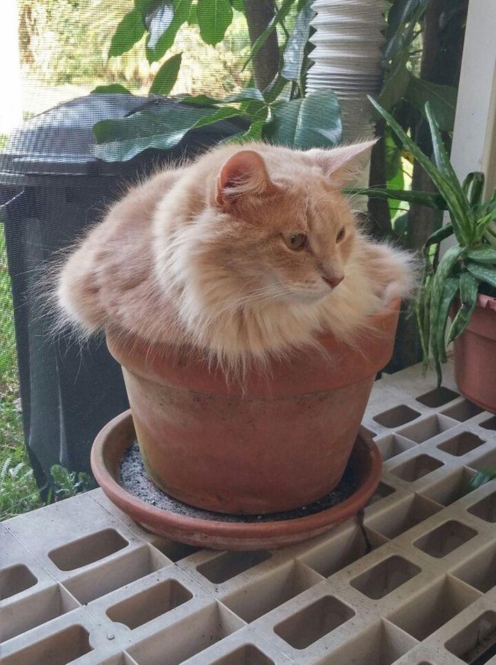 Chats-plantes-1-720x965