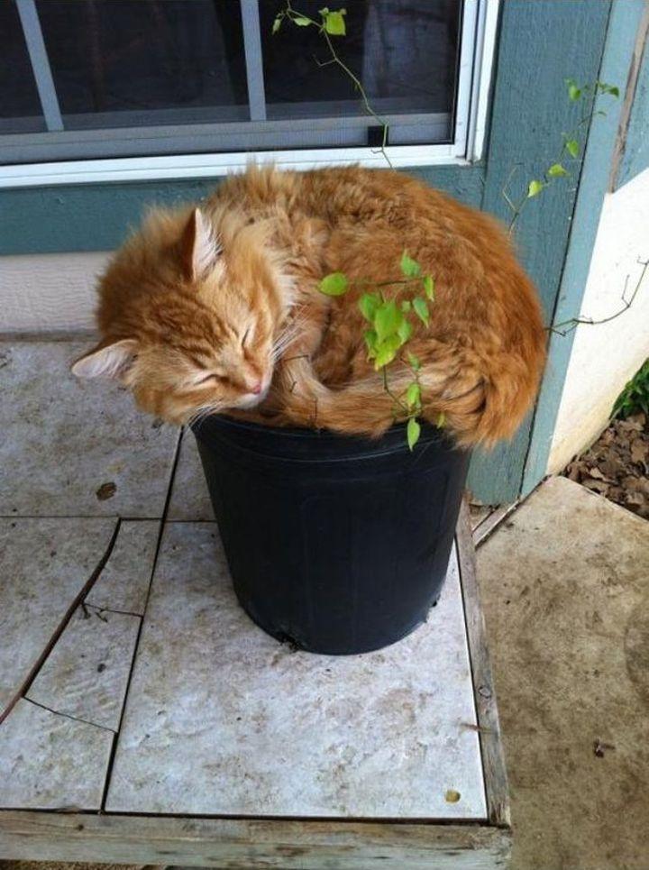 Chats-plantes-17-720x965