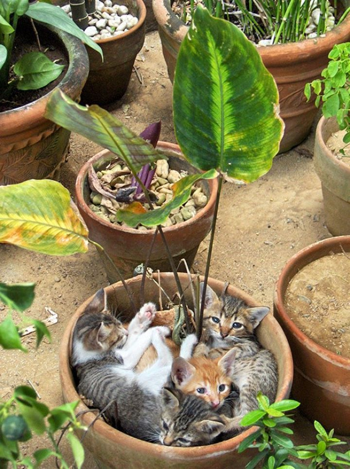 Chats-plantes-2-720x965