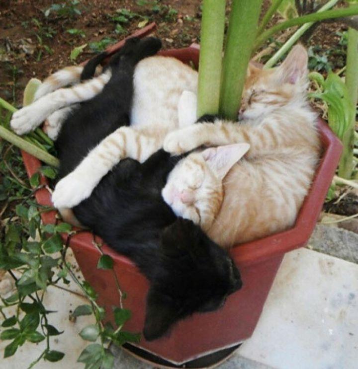 Chats-plantes-4-720x743