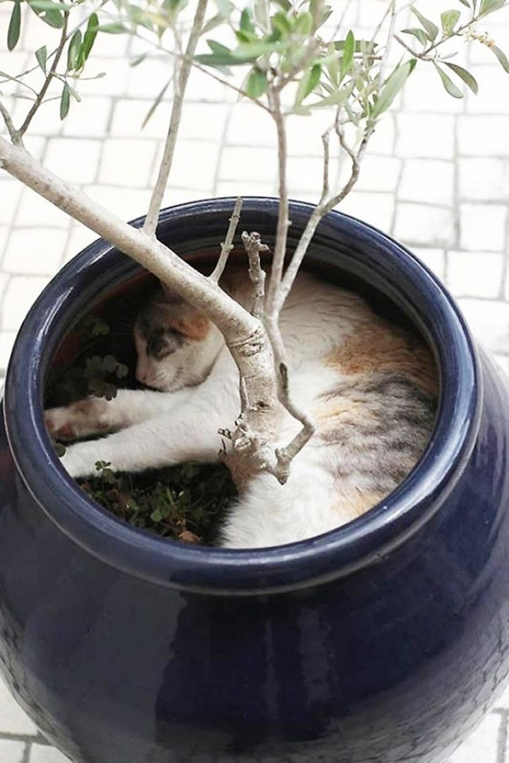 Chats-plantes-8-720x1080