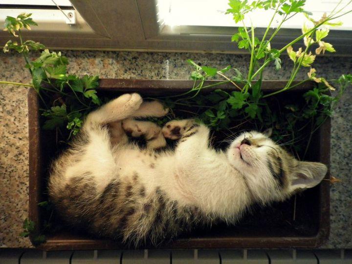 Chats-plantes-9-720x540
